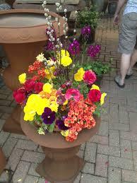 beautiful flowers for the season u2013 analog in a digital world