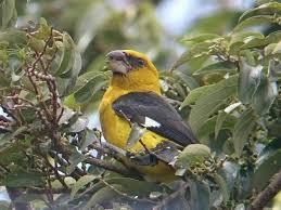 birding at el establo mountain hotel in monteverde costa rica
