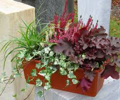 topfpflanzen balkon bepflanzter blumenkasten 40 cm wintergrün pflanzen versand für