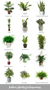 easy flowers to grow indoors decor plant flower day everyday