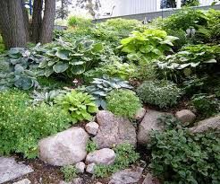 Backyard Ground Cover Options Design Lessons From A Minnesota Shade Garden Rock And Gardens