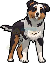 commercials with australian shepherds an australian shepherd looking curious cartoon clipart vector toons