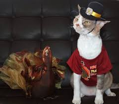 thanksgiving pilgrim cats 11 pictures