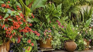 Plants For Patios In The Shade Perennials