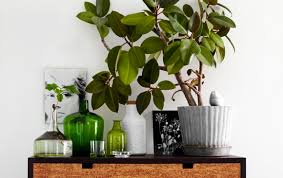 8 super cute indoor plants to buy right now gold coast the