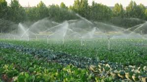 irrigation systems in a green vegetable garden stock footage video