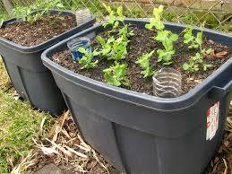 wonderful self watering planter box photo inspiration surripui net