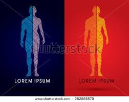 Male And Female Anatomy Silhouette Half Body Male Female Anatomy Stock Vector 282866588