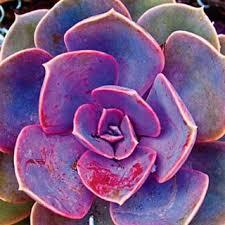flower bulbs shrubs ornamental grasses groundcover plants