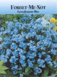 forget me not seed packets seed packets realtorpromo2