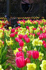 Asheville Nc Botanical Garden by 88 Best Biltmore Gardens Images On Pinterest Biltmore Estate