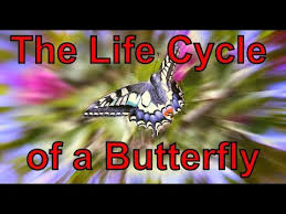 the cycle of a butterfly song silly songs