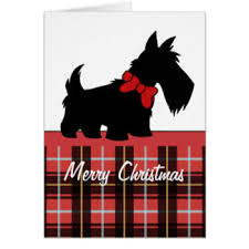 scottish terrier greeting cards zazzle