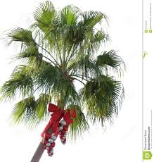 christmas palm tree stock photos download 1 662 images