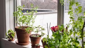 how houseplants improve mental health garden collage
