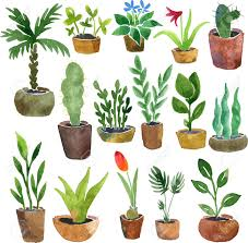 watercolor drawing home plants hand drawn vector illustration