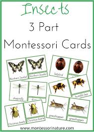 insects 3 part cards montessori nature