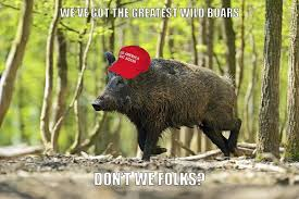 Hog Hunting Memes - wild boars go on rage in iraq kill three isis jihadists