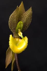 Orchid Flower Pic - stunning colour coordinated orchid all things bright and