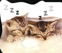 i love kittens roger priddy macmillan