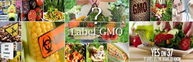 top 20 foods and products that have been genetically modified