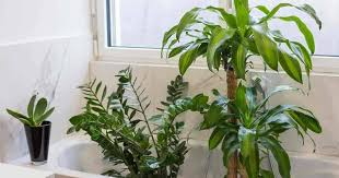 best light for plants 17 best bathroom plants how to use how to choose no light or upright