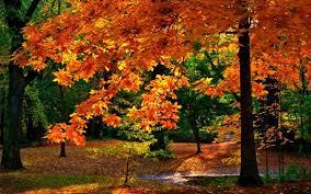 imagenes de otoño para fondo de escritorio buscar fondo de pantalla de otoño imagui