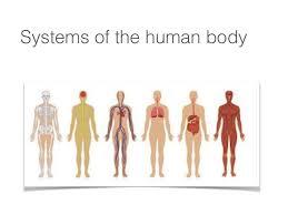 Anatomy Of Human Body Pdf Anatamy Body Systems Pdf