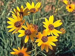 Yellow Flower - top 15 fall blooming flowers for a perennial garden