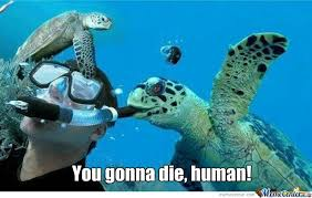 Funny Turtle Memes - turtle memes best collection of funny turtle pictures