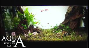 aquascaping lab how to maintain trimming clean and change