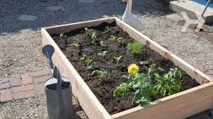 How To Grow Vegetables by How To Plant A Vegetable Garden Youtube
