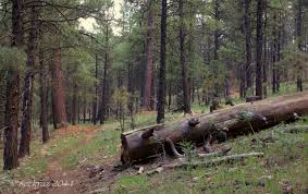 Arizona forest images Coconino national forest scott 39 s place images and words jpg