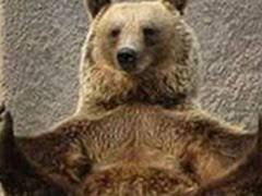 Confession Bear Meme Generator - bear meme weknowmemes