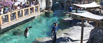 Zoo Lights Utah Hogle Zoo by Pinniped Training Program Utah U0027s Hogle Zoo