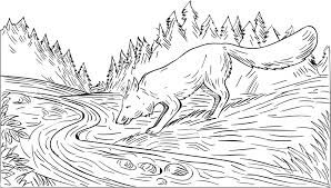 drawing sketch style illustration of a fox drinking from river