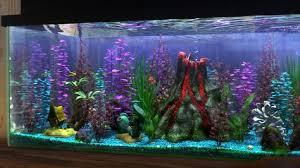 the 25 best finding nemo fish tank ideas on fish tank