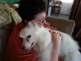 american eskimo dog giving birth white dog diary online august 2013