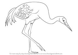 learn draw sandhill crane birds step step drawing