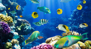 wallpaper pictures for computer fish wallpaper for computer