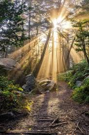 Light And Landscape - and the forest dreams eternally sublim ature roan