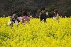norway ranked world u0027s happiest country japan places no 51 u n