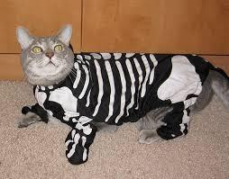 Animal Halloween Costume 153 Furry Creatures U003c3 Images Halloween Cat