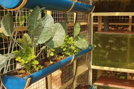 this farming unit lets you grow fish poultry u0026 vegetables organically