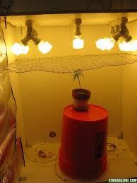 closet grow ideas thesecretconsul com