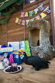 Zoo Lights Woodland Park Zoo by Woodland Park Zoo Blog Happy 20th Birthday To Hornbill Blueberry