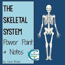 Essentials Of Human Anatomy And Physiology Notes Best 25 Anatomy And Physiology Courses Ideas On Pinterest Human