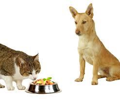 alimentazione casalinga gatto cosa da mangiare a cani e gatti cibo industriale o dieta