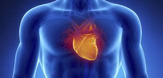 Anatomy Of The Heart Lab Inflammation Testing Could Prevent 10 Of Heart Attacks And