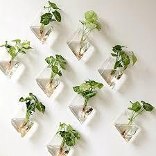 hanging air plant hanging air plants amazon com